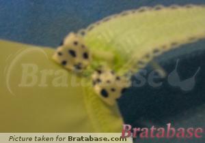 Detail of bow (gore & strap) on 'pistachio' color | 36G - Freya » Deco (4234)